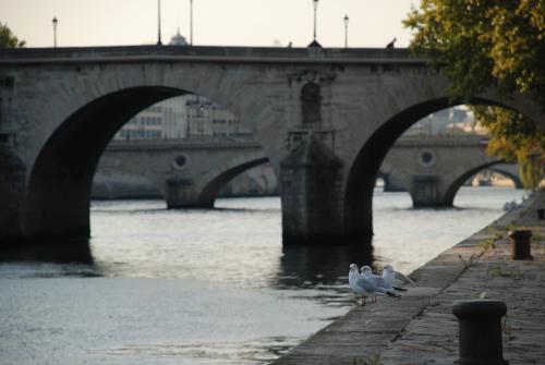 Seine 17.10.2011 005